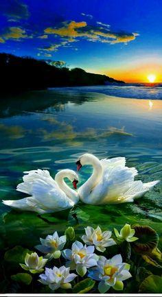 Amour de la nature.