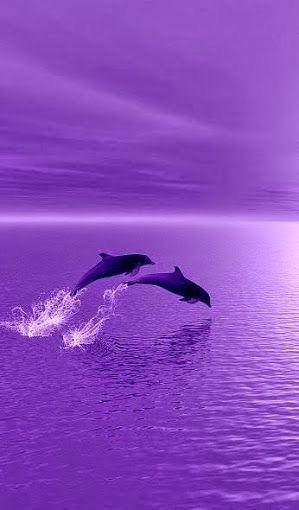 Joie de dauphins