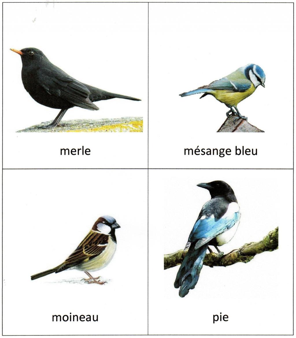 Imagier des oiseaux les z 39 a m i des petits for Les petits oiseaux