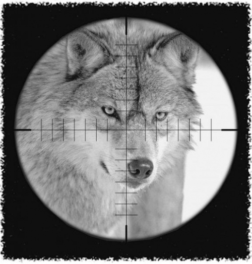 chasse_loup.jpg