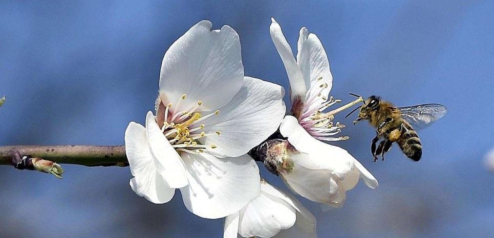image bio abeille.jpg