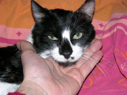 Boudu, le nouveau chat d' Alain