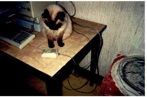 Gros problème pour le Chat