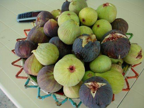 Figues d'Amagaz
