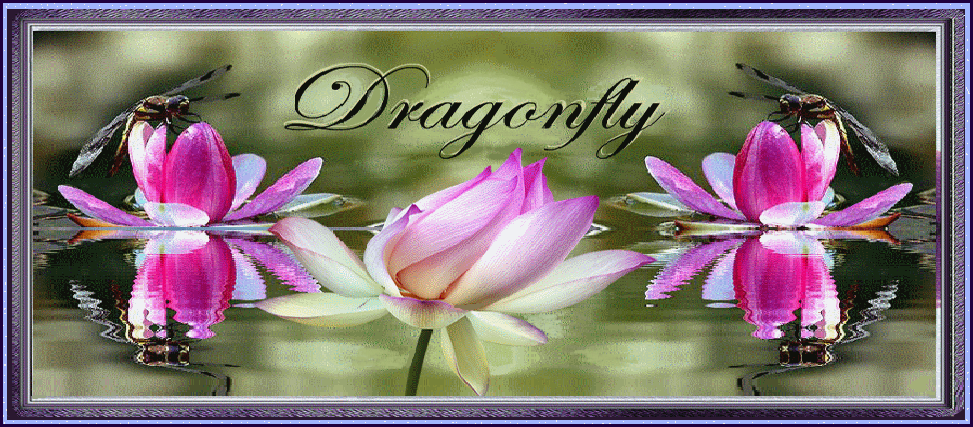 § Dragonfly §