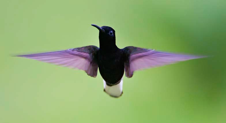 Oiseau Plume.png