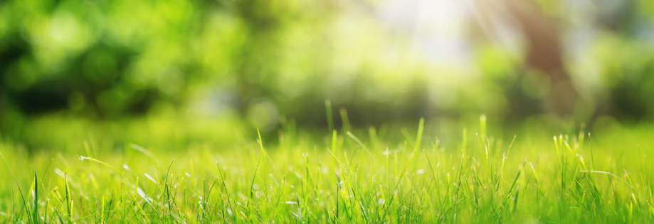 Regarder l'herbe pousser 3.png