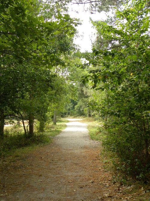 Un des chemins de la forêt
