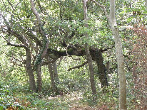 Beaucoup d'arbres comme celui-ci ont des formes bizarres
