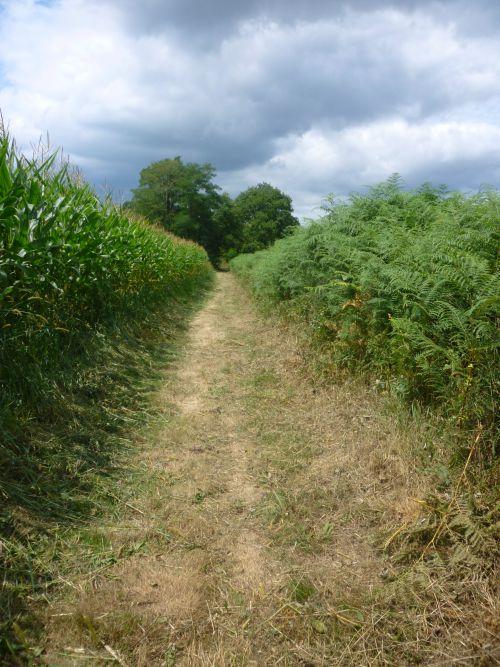 Entre champs de maïs et fougères près de Pomps