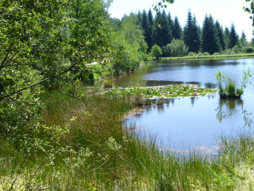 Lac aux nénuphars après Cardaillac