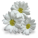 fleurs-19.png