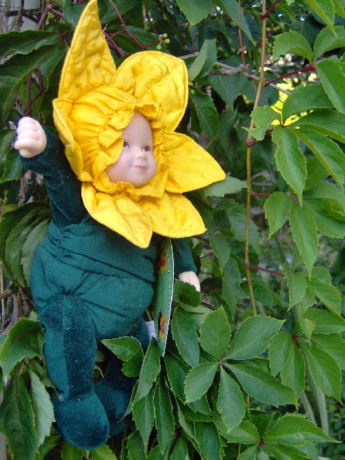 Baby Daffodils (2/3)
