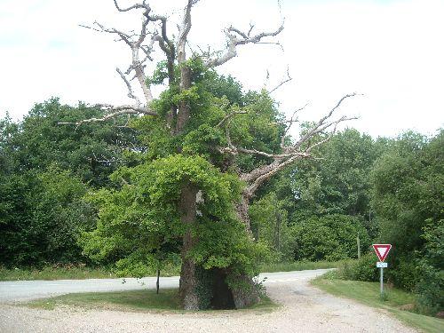 le chêne du pouldu