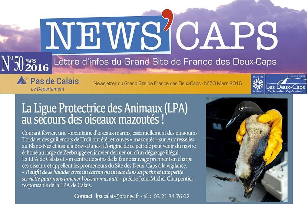 news cap.jpg