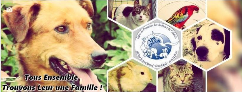 photo couverture refuge lpa adoption.JPG
