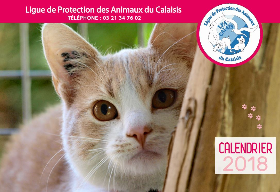 couverture calendrier chat 2018.JPG