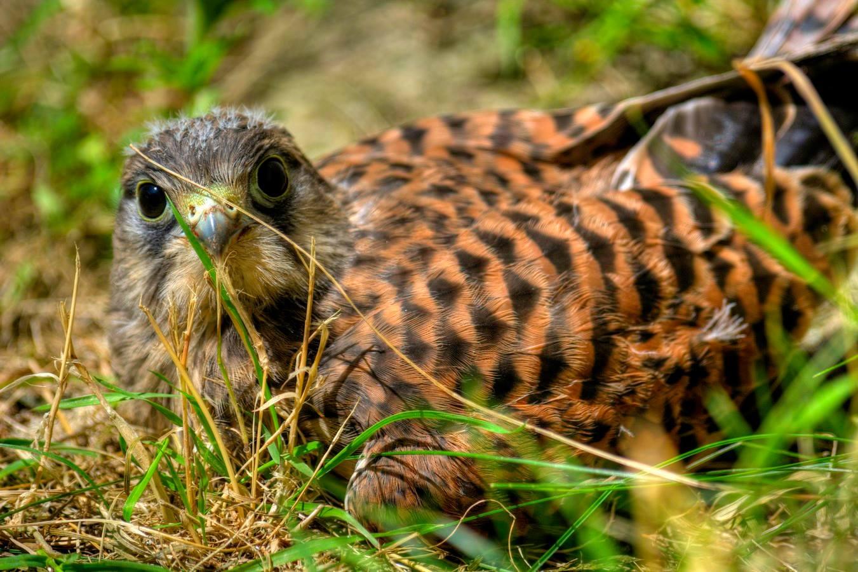 oiseaux 8.jpg