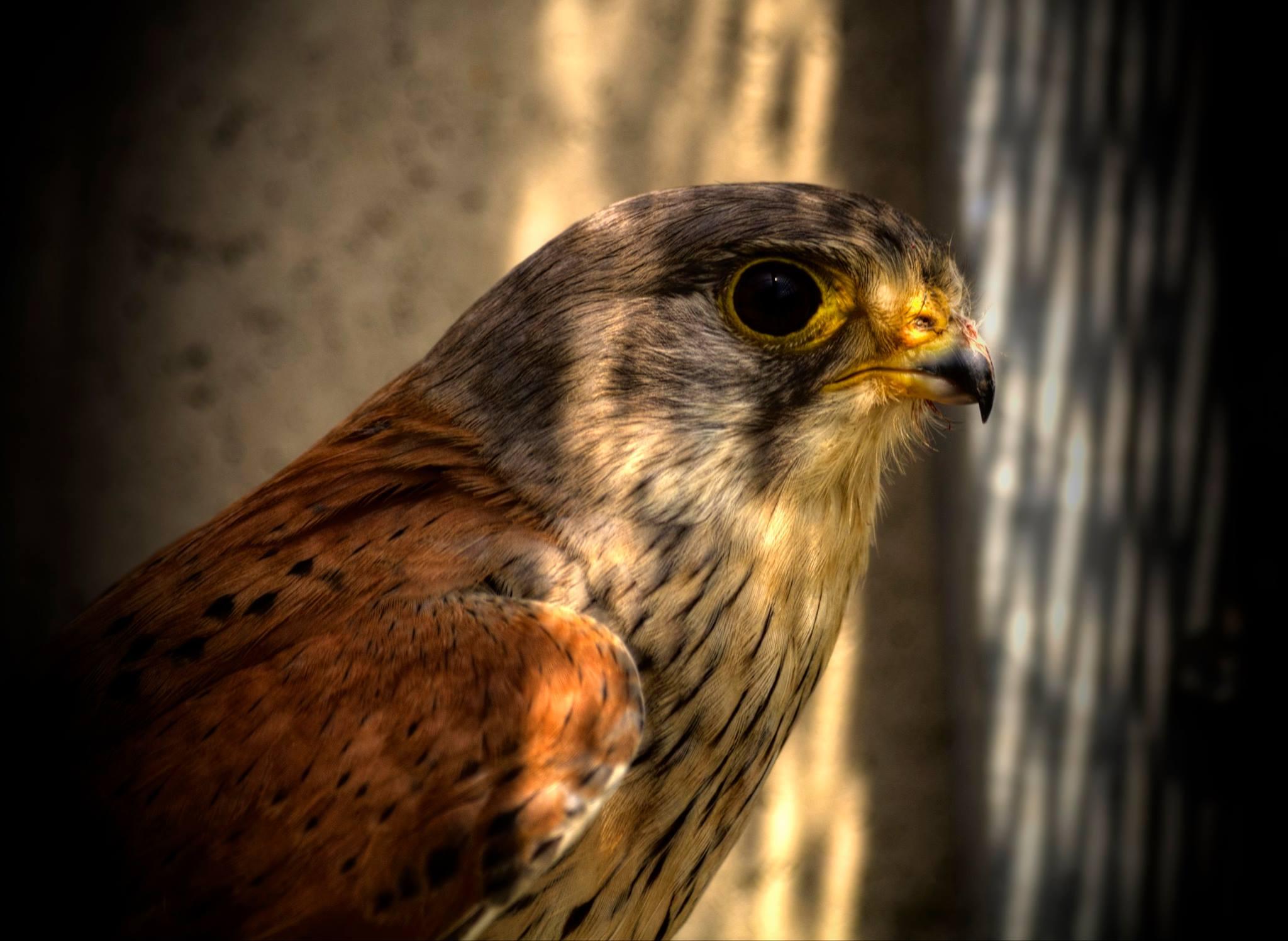 oiseaux 9.jpg