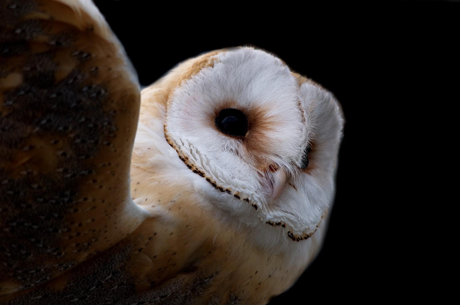 oiseaux 11.jpg