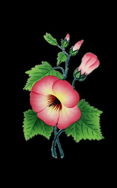 fleur rose 2.png