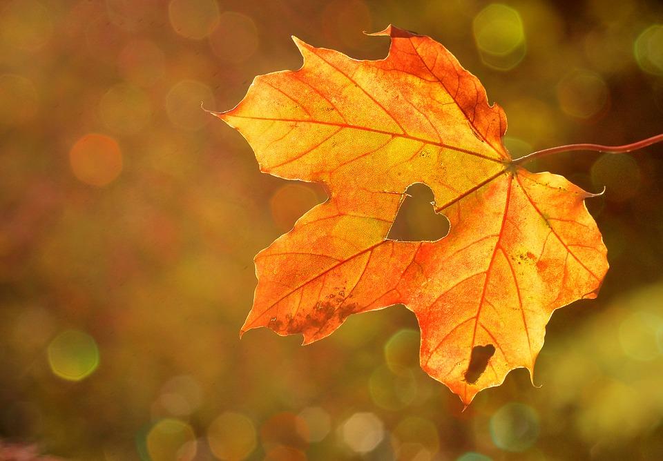 Feuille d'automne.jpg