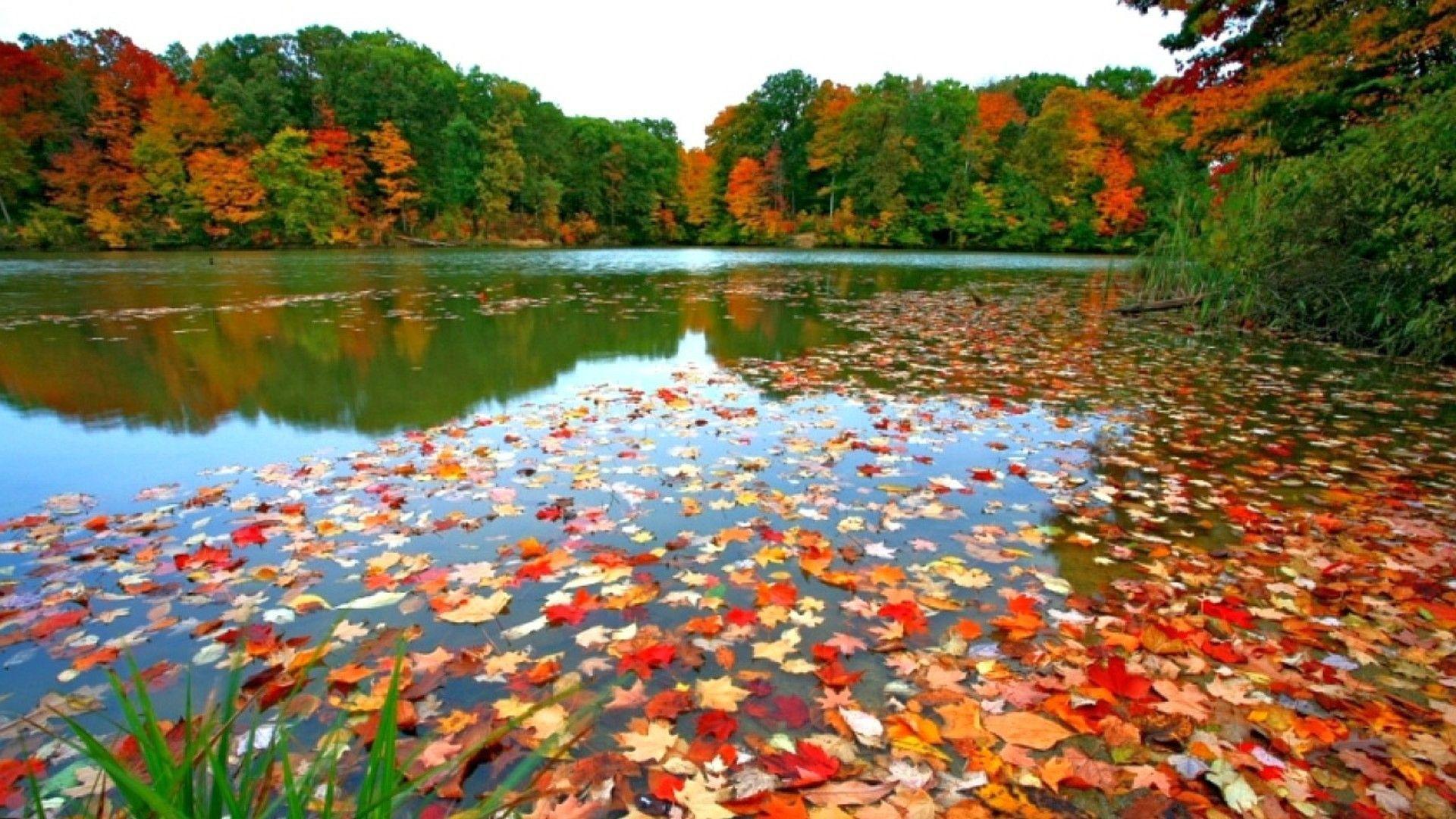Lac en automne.jpg