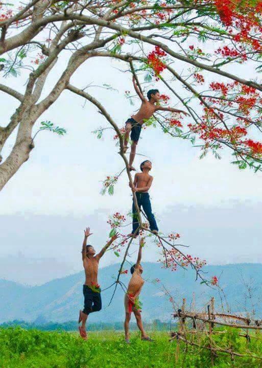 Enfants dans les arbres.jpg