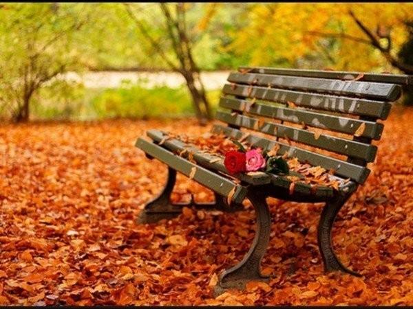 Banc fleuri en automne.jpg