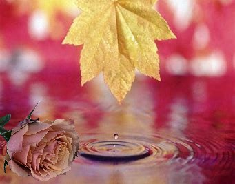 Rose et feuille.jpg