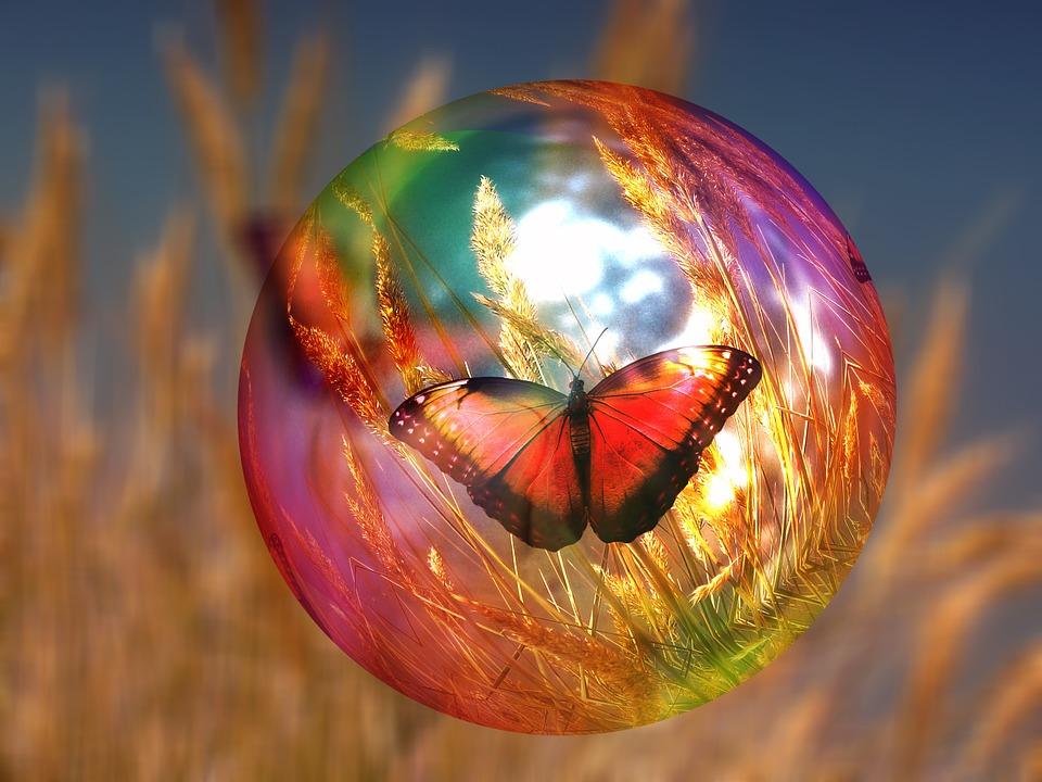 papillon dans bulle d'été.jpg