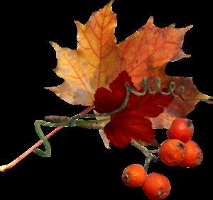 feuille et fruits d'automne.png
