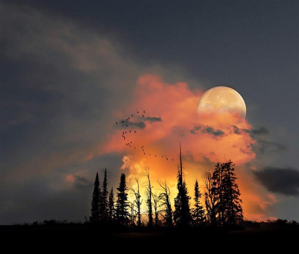 clair de lune 3.jpg
