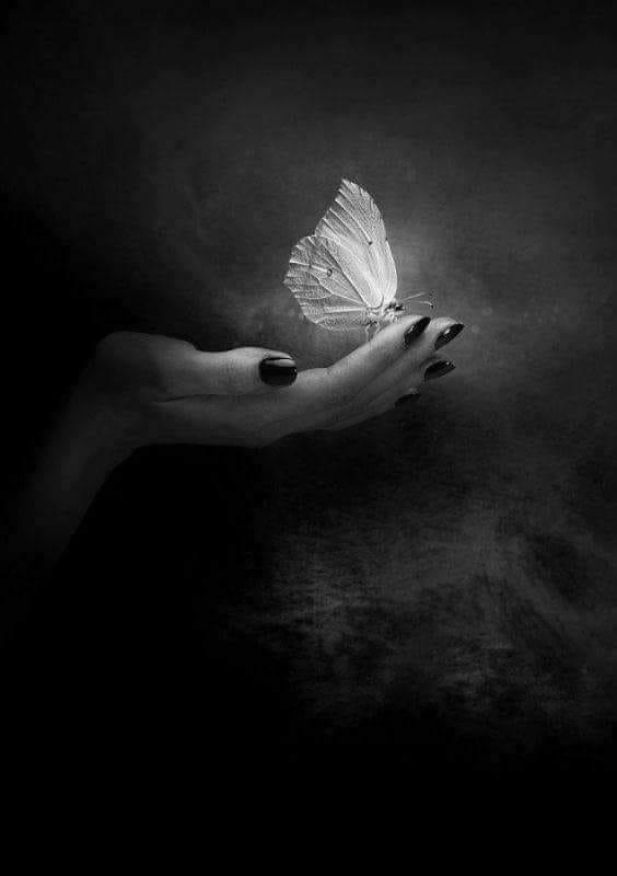 main de femme et papillon.jpg