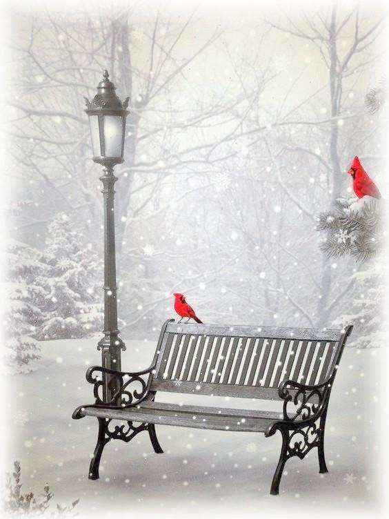 oiseaux rouges dans la neige.jpg