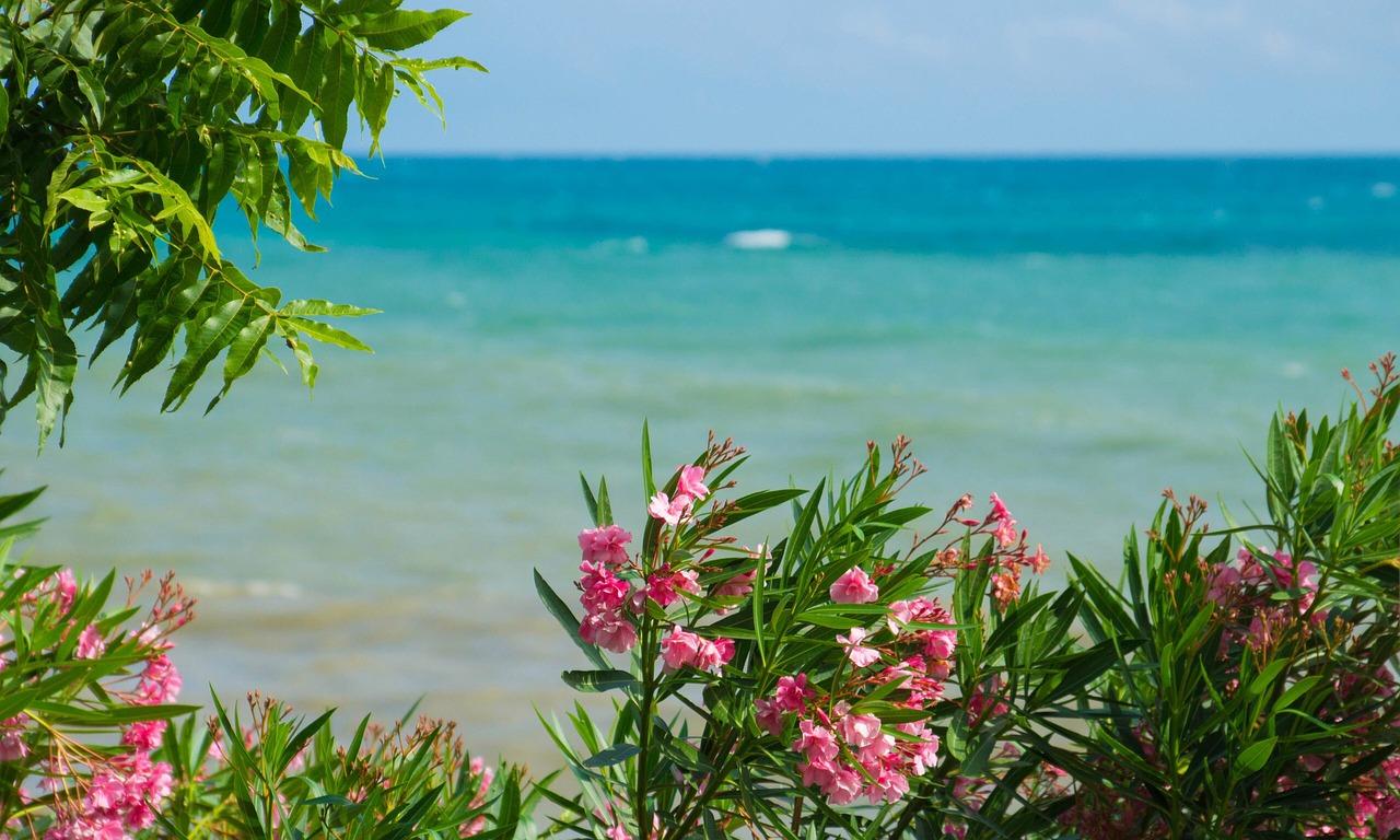 Vue sur mer et fleurs