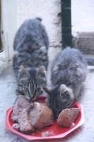 les chats 004.JPG