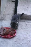 les chats 001.JPG