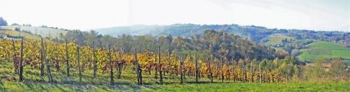 vigne jurançon (4).jpg