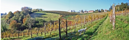 vigne jurançon (5).jpg