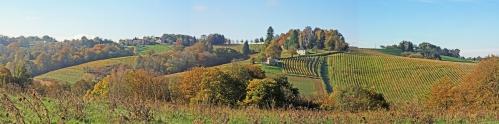 vigne jurançon (2).jpg