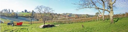 vigne jurançon (6).jpg