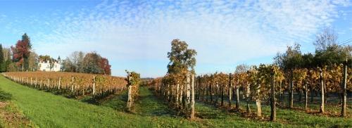 vigne jurançon 3.jpg