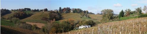 vigne jurançon (9).jpg