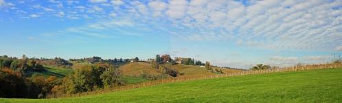 vigne jurançon (1).jpg