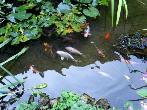 buvettegoldfish.JPG
