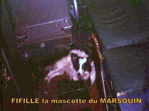 Fifille chienne mascotte du Marsouin