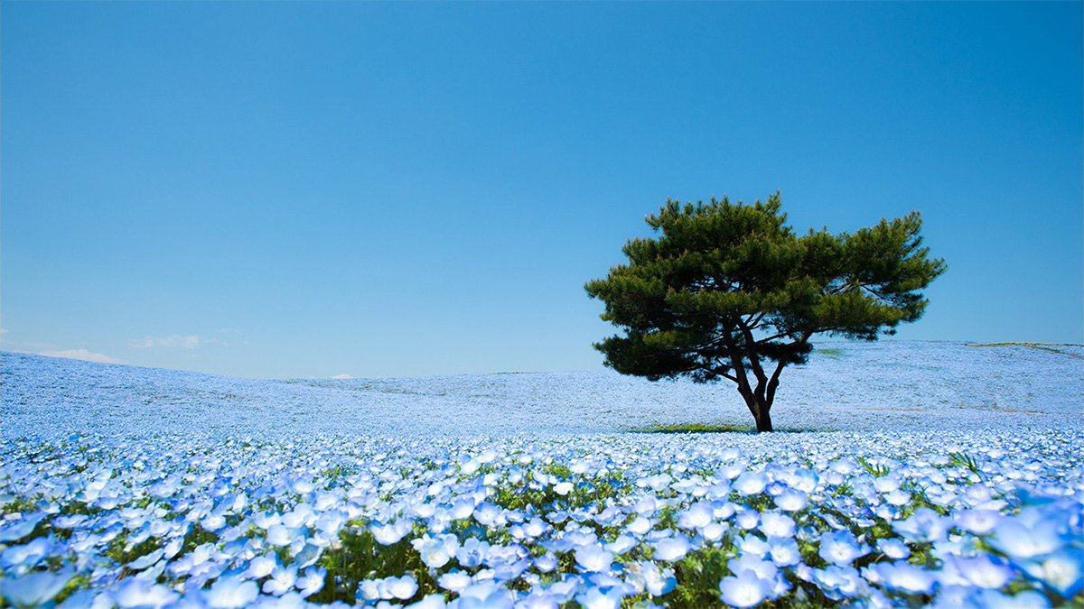 itachi_seaside_park.jpg