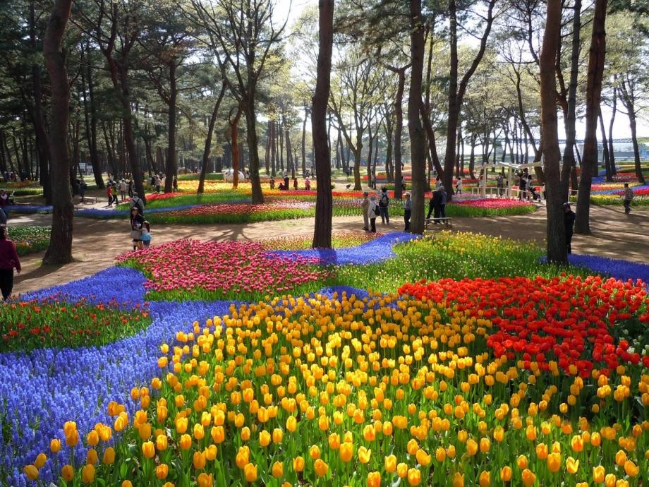itachi_seaside_park_tulip.jpg