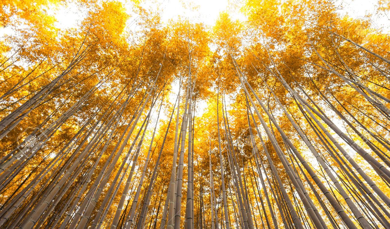 sagano_automne.jpg
